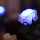 GRACE ROSE(グレイスローズ):ブルー