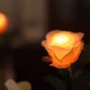 GRACE ROSE(グレイスローズ):オレンジ