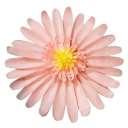 クイーンローズMレッド【Queen Rose】Giant Flower 30cm