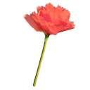 ジャイアントフラワー手作りキット エフフラワーL【花径約50cm】