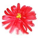 クイーンローズM ライトブルー【Queen Rose】Giant Flower 30cm