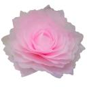 クイーンローズM ライトグリーン【Queen Rose】Giant Flower 30cm