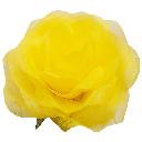パステルローズL レモン Giant Flower 花径約45cm