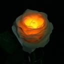 TWINKLE ROSE(トゥインクルローズ):イエロー 水に反応して光るバラの花