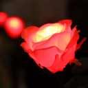 GRACE ROSE(グレイスローズ):レッド
