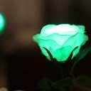 GRACE ROSE(グレイスローズ):グリーン