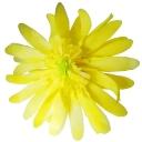 パステルガーベラ レモン