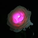 TWINKLE ROSE(トゥインクルローズ):ピンク 水に反応して光るバラの花